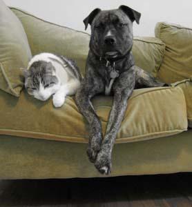 catand dog